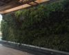 Schaduf:Cultivating a New Urban Landscape
