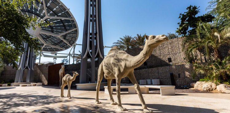 Expo 2020 Pavilions Premiere Launched
